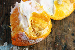 Rotten mandarin. On rusty wooden background Royalty Free Stock Image