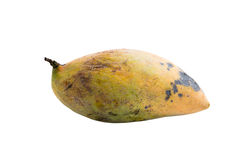 Rotten mangoes fruit on white background. Rotten mangoes fruit isolated on white background Stock Photos