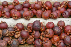 Rotten mangosteen fruit. Royalty Free Stock Image