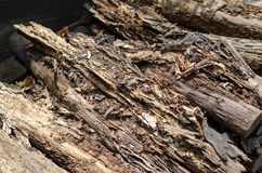Rotten mangrove wood stock image