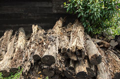 Rotten mangrove wood royalty free stock photos