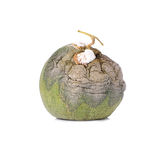 Rotten melon from Japan on a white background. Royalty Free Stock Images