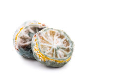 Rotten, moldy and decomposing lemon on white background Stock Photos