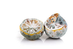 Rotten, moldy and decomposing lemon on white background Royalty Free Stock Photography