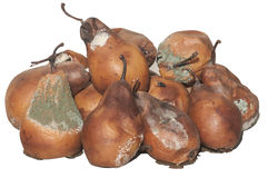 Rotten and moldy pears Royalty Free Stock Photos