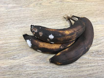 Rotten and mouldy bananas Stock Photography