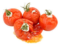 Rotten Mouldy Tomatoes Royalty Free Stock Photos