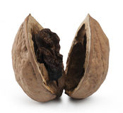 Rotten Nut. Clipping path Stock Images