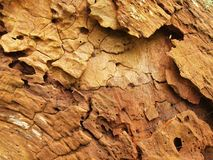 Rotten old wood. Fallen tree with marks of attack by insects and wood destroying fungus. Detail view Royalty Free Stock Photography
