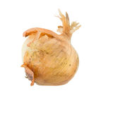 Rotten onion isolated Stock Images