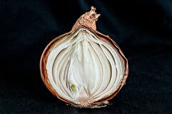 Rotten onion Royalty Free Stock Image