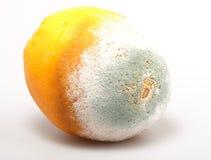 Rotten orange Stock Photos