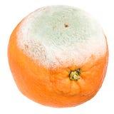 Rotten orange. On white background Royalty Free Stock Image