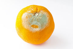Rotten orange. Closeup of Rotten orange partially covered with mold Royalty Free Stock Photography