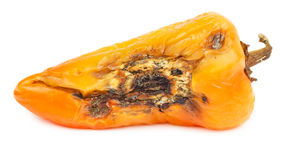 Rotten orange bell pepper isolated Stock Images
