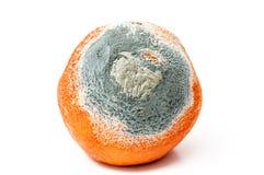 Rotten orange. Detail of a rotten orange Royalty Free Stock Photography