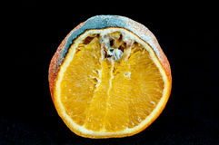 Rotten orange Stock Image