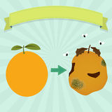 Rotten orange Stock Image