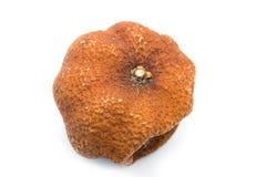 Rotten orange isolated Royalty Free Stock Photos