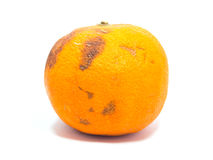 Rotten Orange Royalty Free Stock Images