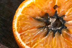 Rotten Orange with Mold (HDR Image). A close-up of cross section of a rotten orange with mold – HDR image Stock Photo