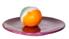 Rotten orange on the plate Stock Photo