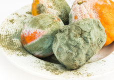 Rotten oranges and lemon covered with mold. Royalty Free Stock Photo