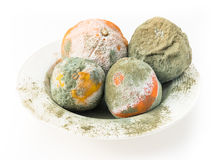 Rotten oranges and lemon covered with mold. Royalty Free Stock Photography