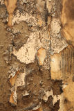 Rotten paperhanging. Grungy texture of a burnt wall Royalty Free Stock Photo