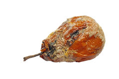 Rotten Pear. A rotten pear isolated on white.  The mouldy fruit is even bubbly from fermenting Stock Photos