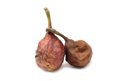 Rotten pear Royalty Free Stock Images