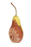 A rotten pear on white Stock Image