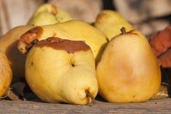 Rotten pears Royalty Free Stock Photos