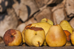 Rotten pears Stock Images