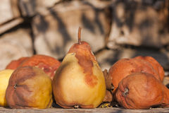 Rotten pears Stock Image