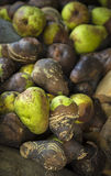 Rotten pears Royalty Free Stock Image