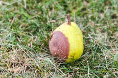 Rotten pears on straw Royalty Free Stock Photography