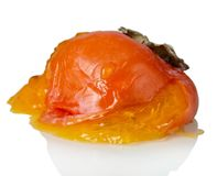 Rotten persimmon fruit isolated on white. Closeup. Rotten persimmon fruit isolated on white background. Closeup Royalty Free Stock Images