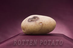 Rotten potato. On red background Royalty Free Stock Photo
