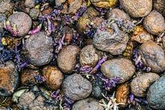 Rotten potatoes cornered. Close view Royalty Free Stock Photo