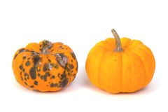 Rotten  pumpkin and ripe  pumpkin Royalty Free Stock Photo