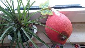 Rotten pumpkin. Rot, pumpkin, flower Stock Photos