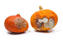 Rotten pumpkins isolated on white background Stock Photo