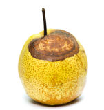 Rotten snow pear Royalty Free Stock Photography