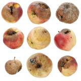 The rotten spoiled inedible apples set Royalty Free Stock Photos