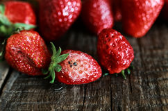 Rotten strawberries concept gmo Royalty Free Stock Photos