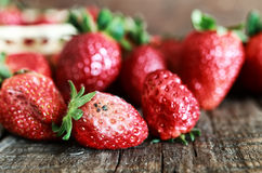 Rotten strawberries concept gmo Royalty Free Stock Photography