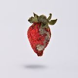 Rotten strawberries. High resolution image of rotten strawberries Royalty Free Stock Photos