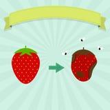 Rotten strawberry Stock Photo