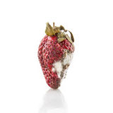 Rotten strawberry Royalty Free Stock Photos